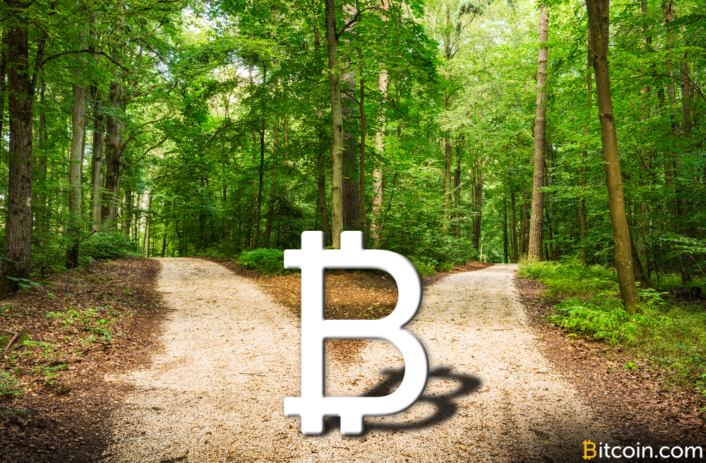 This Legend Hid Bitcoin All Over Electric Forest Last Year Which Is Now Worth Thousands