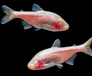 Sleepless Fish May Be The Answer To Humans Staying Up All Night