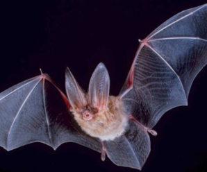 Major Festival Warned of Dangerous Bat Infestation
