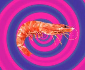 England's shrimp are testing constructive for cocaine and ketamine