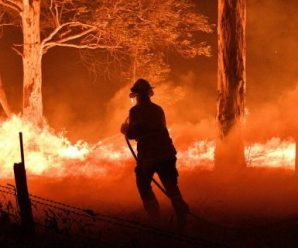 Aussie artists and labels are chipping in for bush fire relief!
